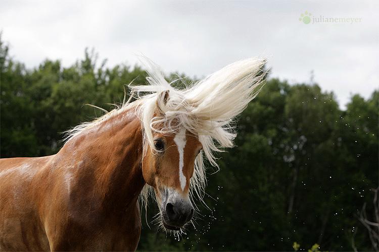 Sonne im Haar ...