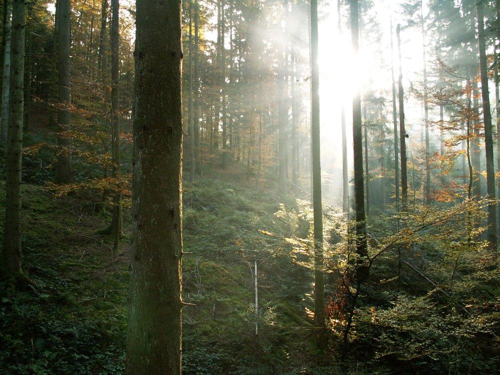 Sonne im Herbstlichen Wald