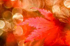 Sonne im November