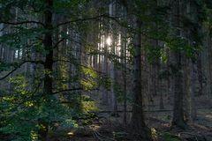 Sonne-im-Wald