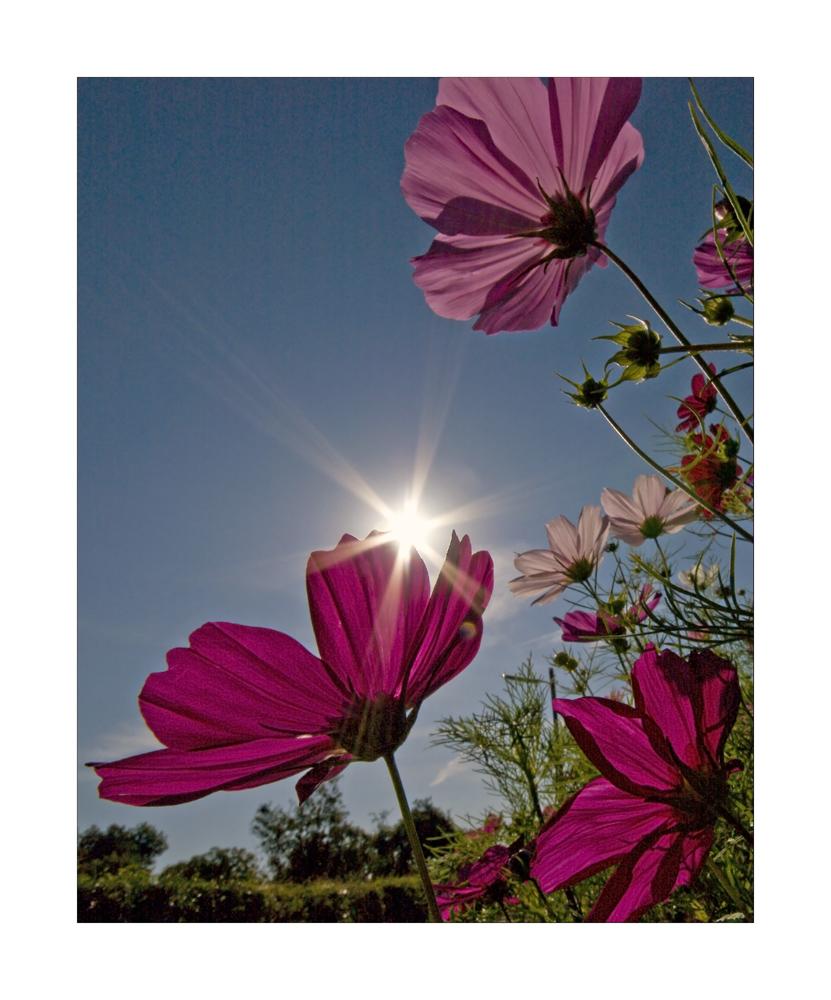 Sonne = Leben