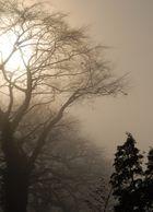 Sonne Nebel Bäume