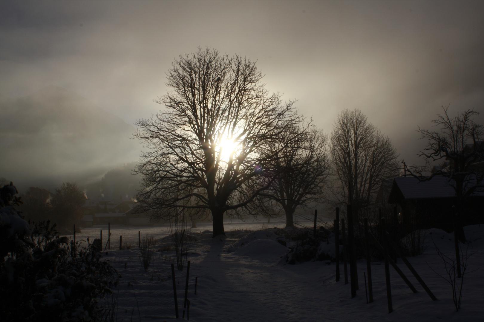 Sonne , Nebel , Bäume, Schnee