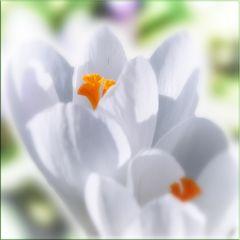 Sonne, Sonne: Frühling