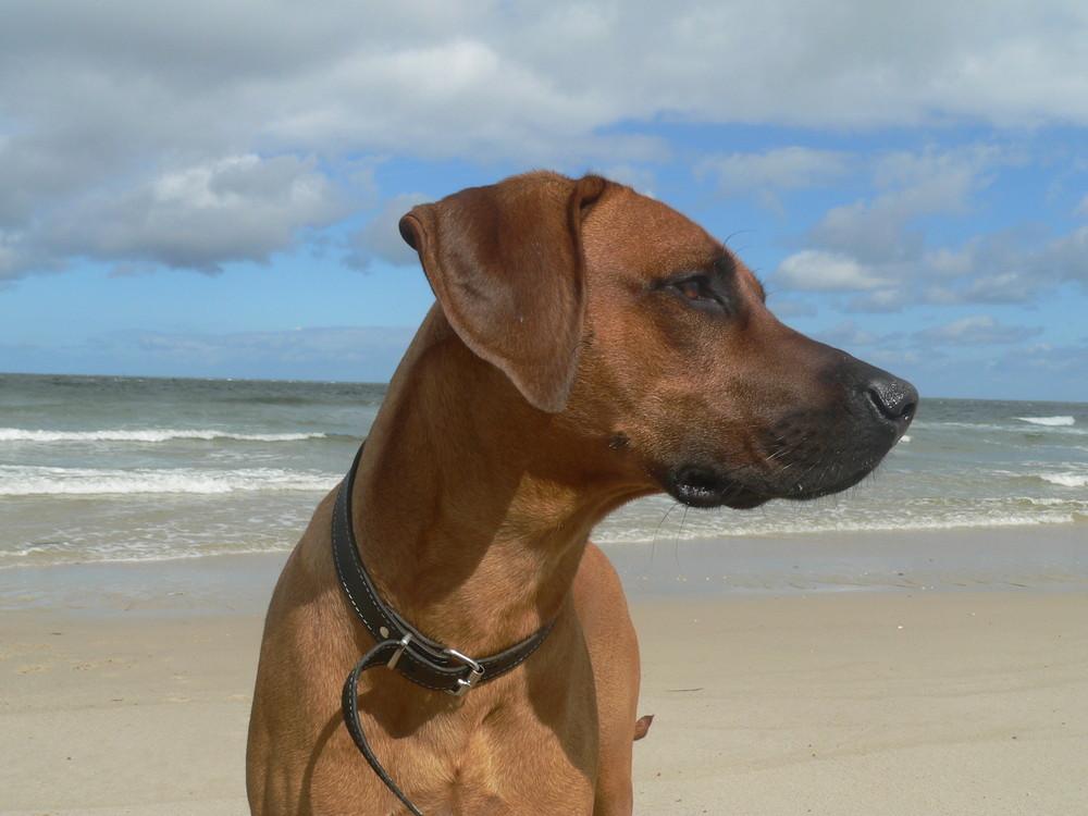 Sonne- Strand- Meer- was will Rideback mehr