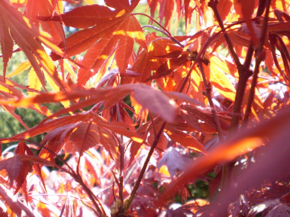 Sonne und Blätter