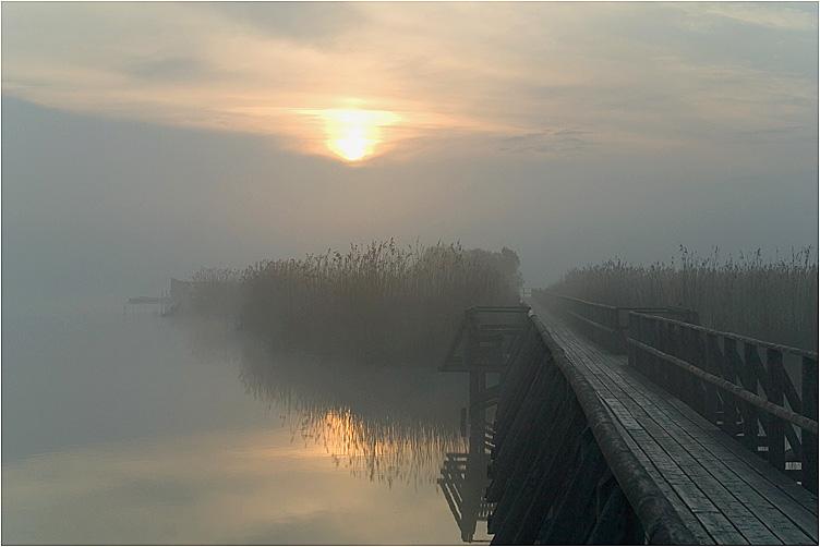 Sonne und Nebel am Federsee