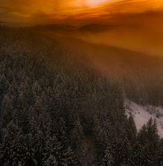 Sonne und Nebel streicheln den Wald