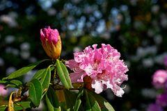 Sonnen Blüten