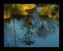 Sonnen-Funken zünden im Sumpfgras... - (Moor-Herbst)