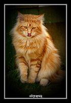 Sonnen-Katze