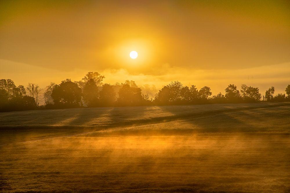 Sonnen-Nebel-Feld