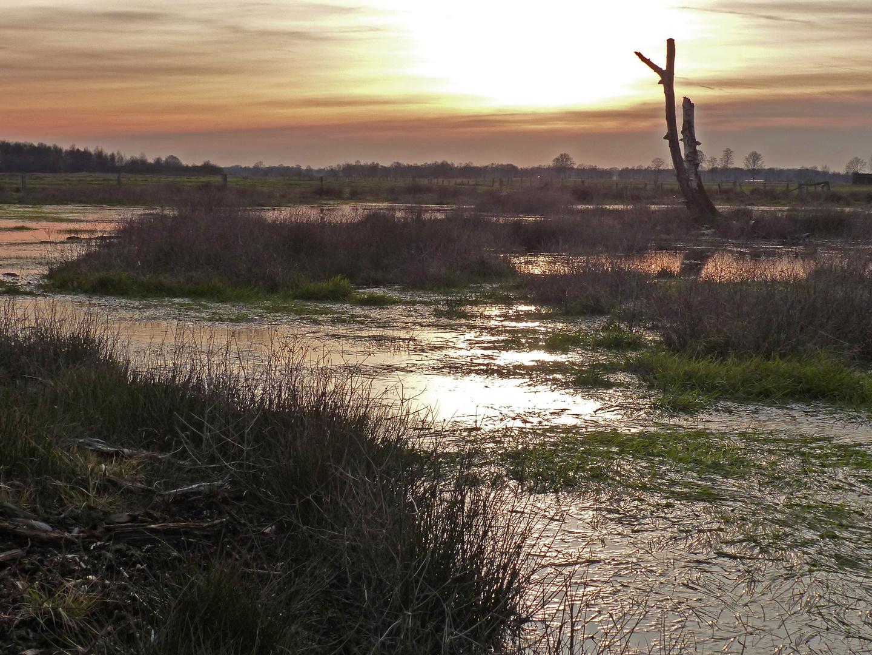 Sonnen Untergang im Moor