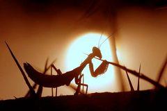 Sonnenanbeterin in der Wilhelma