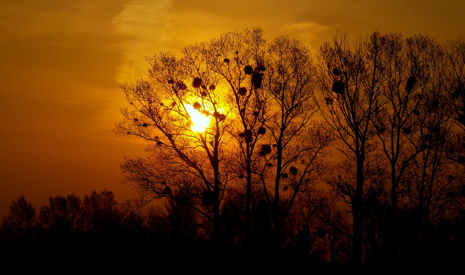 ***Sonnenaufgang***