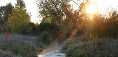 Sonnenaufgang am Bachlauf der Biber