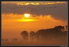 Sonnenaufgang am Bodden