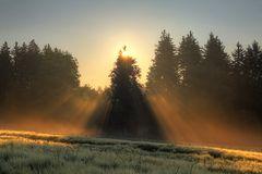 Sonnenaufgang am Gerstenfeld