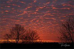 Sonnenaufgang am linken Niederrhein ....