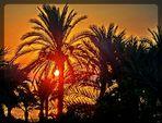 Sonnenaufgang am Meer unter Palmen