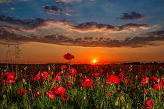 Sonnenaufgang am Mohnfeld