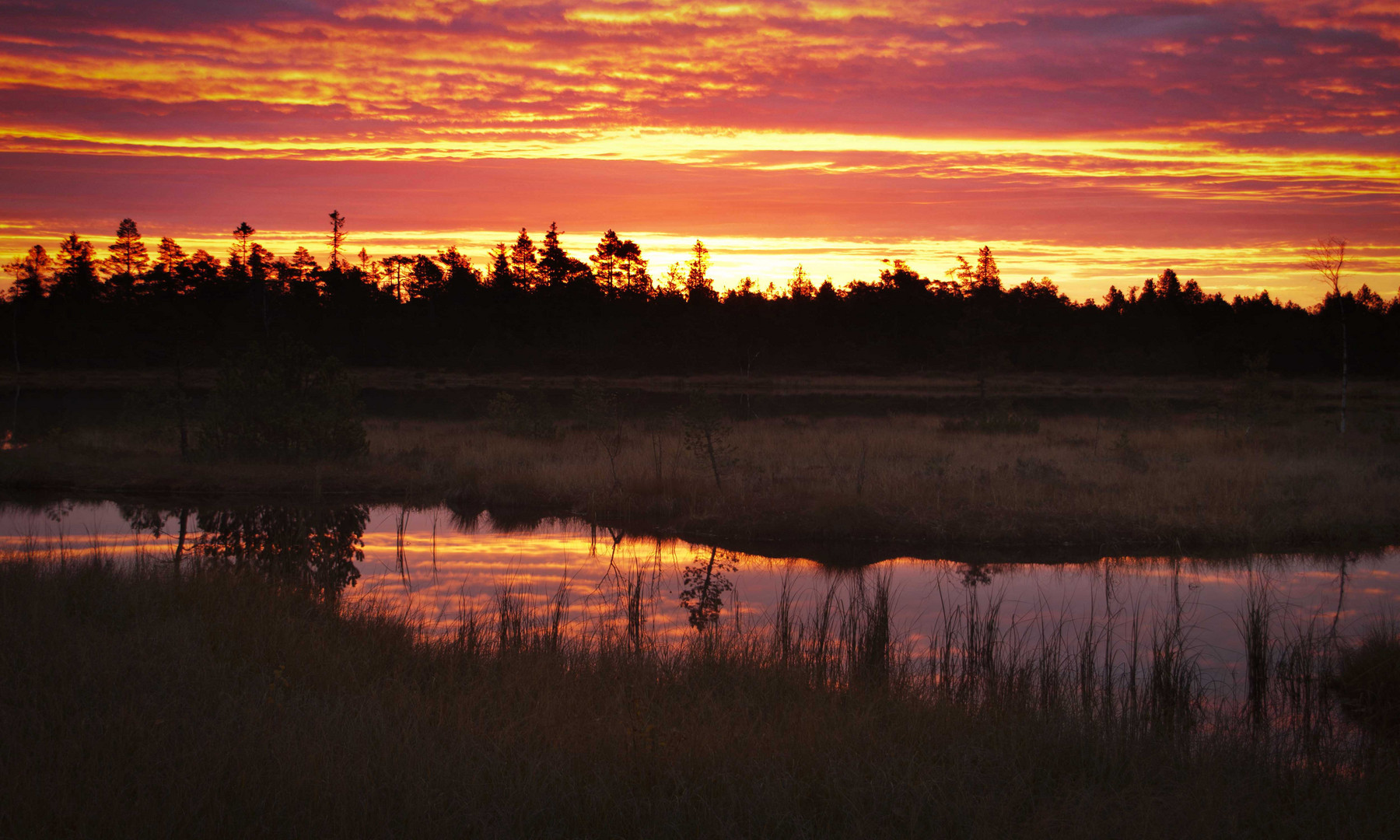 Sonnenaufgang am Wildsee