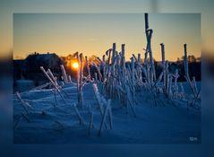 Sonnenaufgang an der Mulde