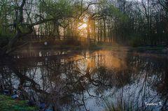 Sonnenaufgang an der Nette