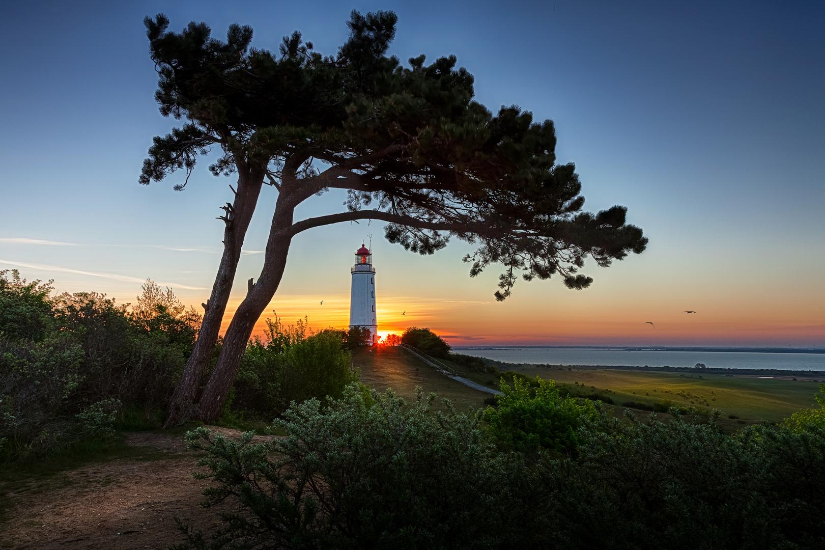 Sonnenaufgang auf Hiddensee