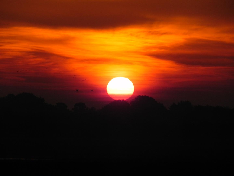 Sonnenaufgang bei den Kranichen
