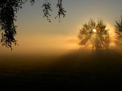 Sonnenaufgang bei Morgennebel 2