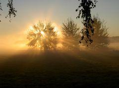 Sonnenaufgang bei Morgennebel