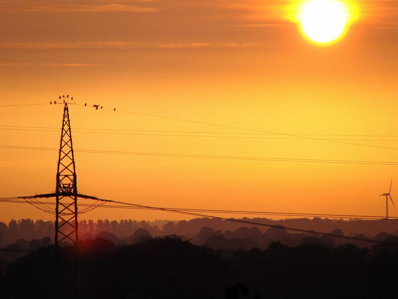 Sonnenaufgang - die Vögel erwachen