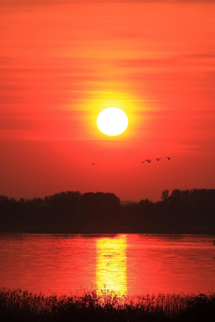 Sonnenaufgang Elbfähre