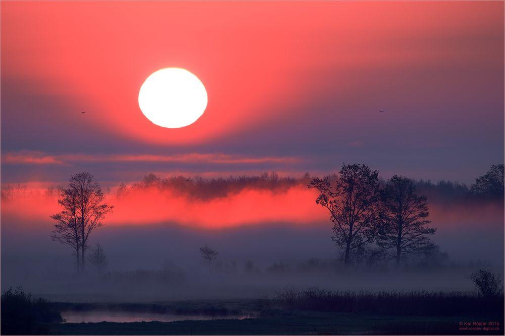 Sonnenaufgang im Biebrza Nationalpark