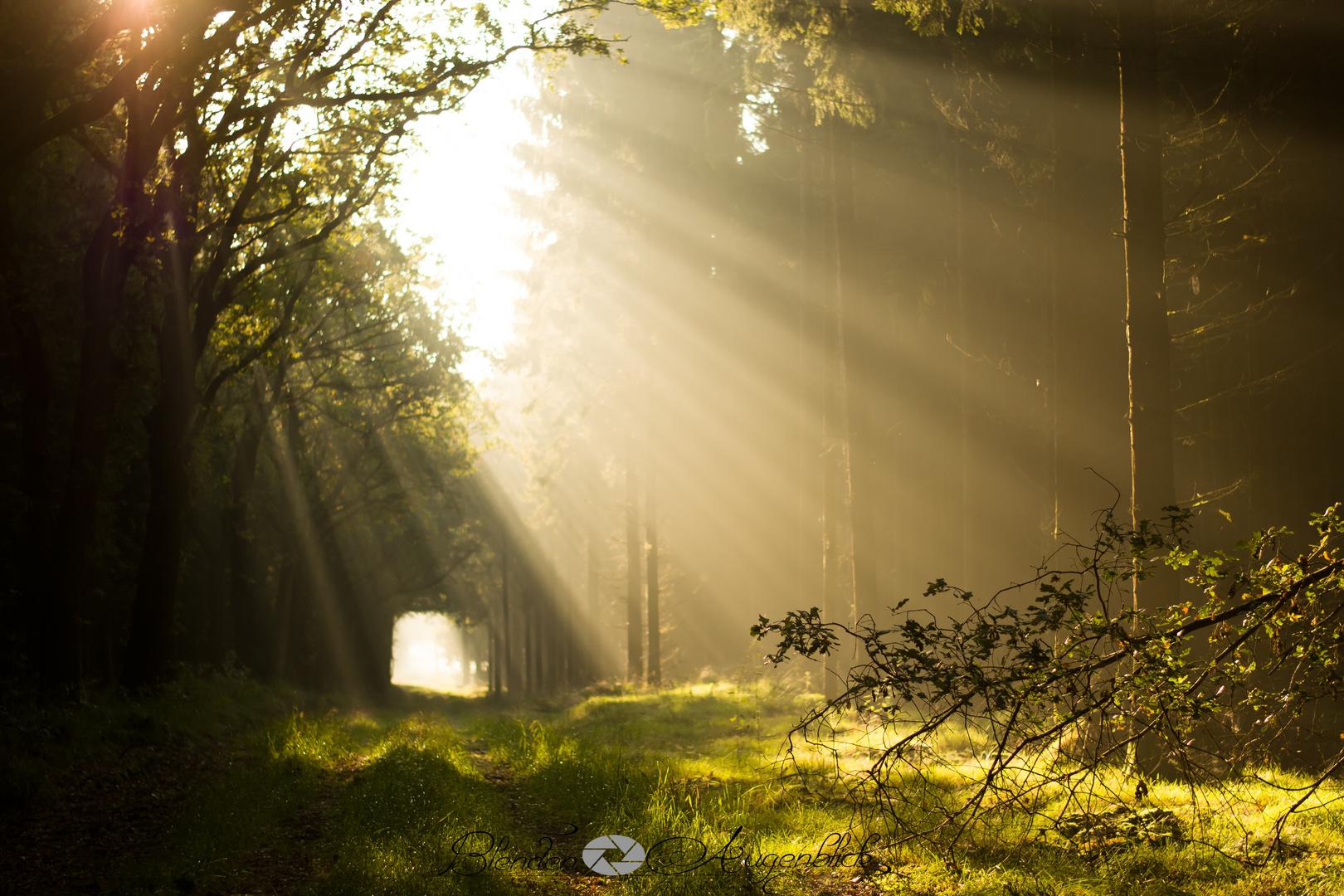Sonnenaufgang im Eleonorenwald.