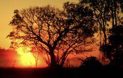 Sonnenaufgang im Kakadu Nationalpark