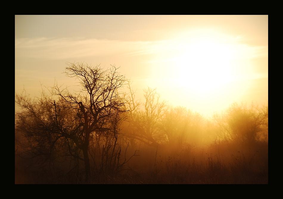 Sonnenaufgang im Krüger Nationalpark