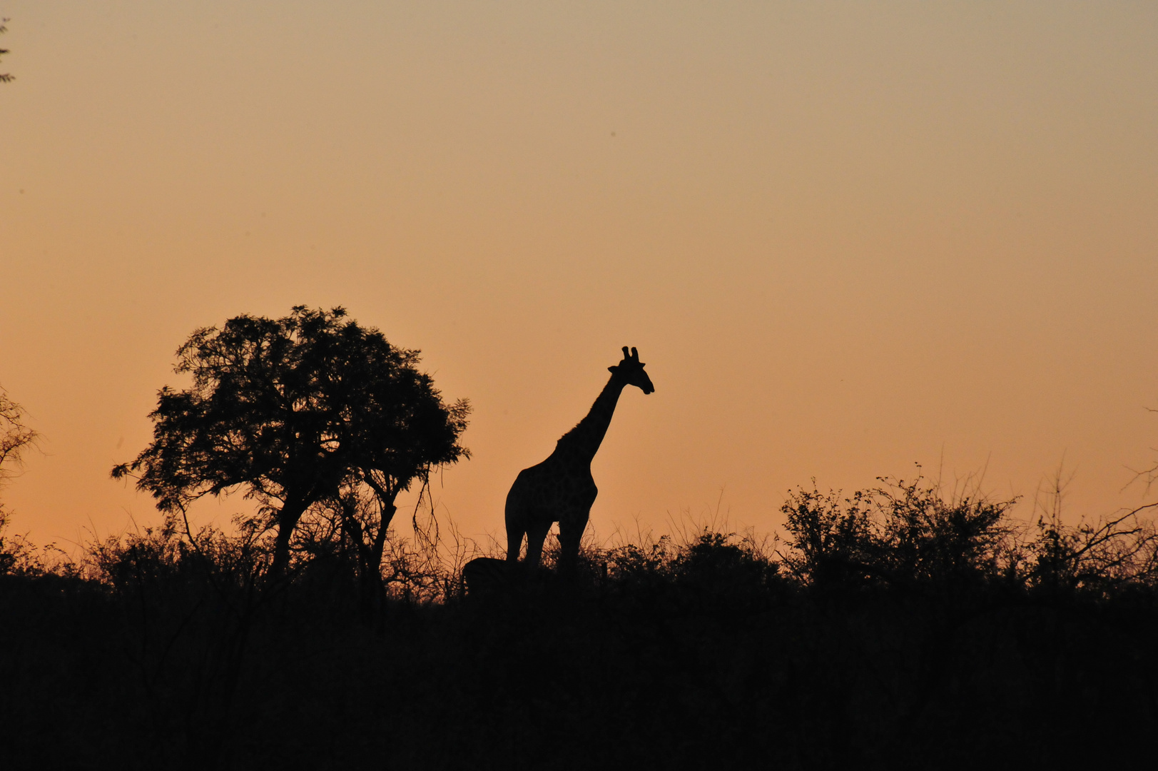 Sonnenaufgang im Krüger-Nationalpark Südafrika