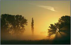Sonnenaufgang im Moor - Sunup in the swamp
