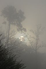 Sonnenaufgang im Nebel (1. Mai 2009)