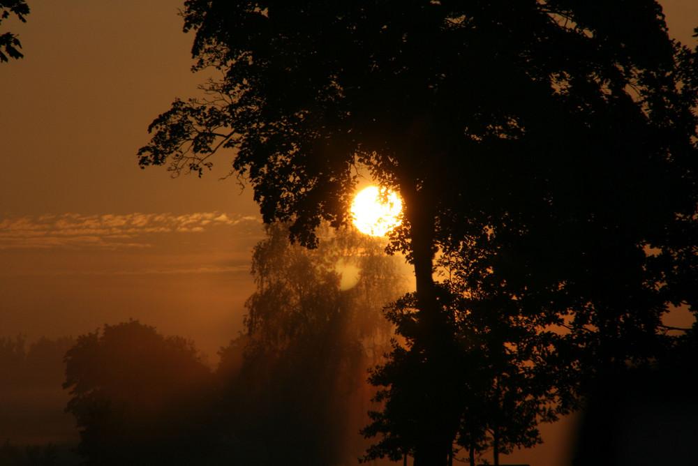 Sonnenaufgang im Nebel - Platz für Träume