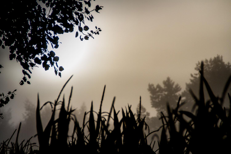 Sonnenaufgang im Nebelwald