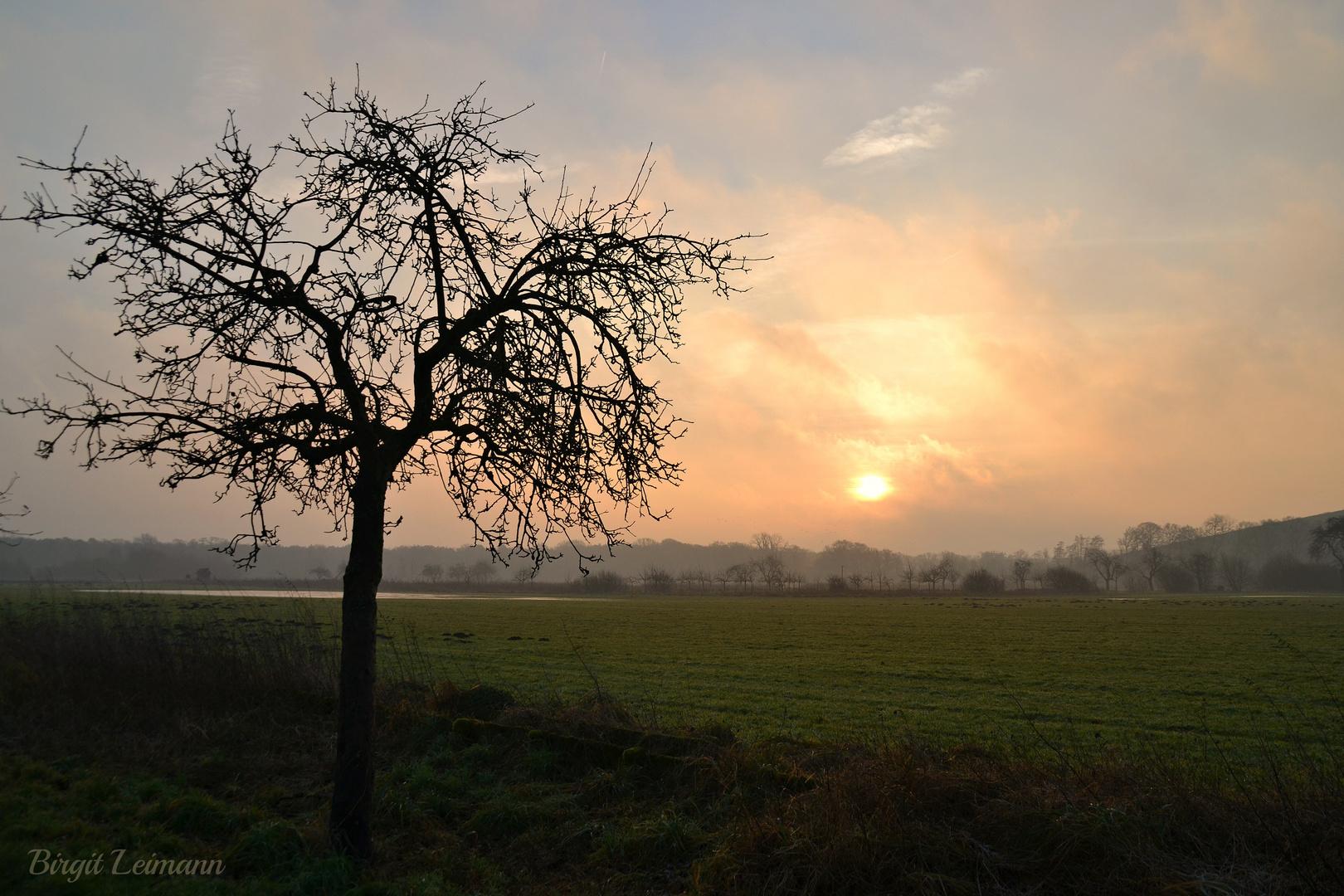 Sonnenaufgang in den Rieselfeldern bei Münster