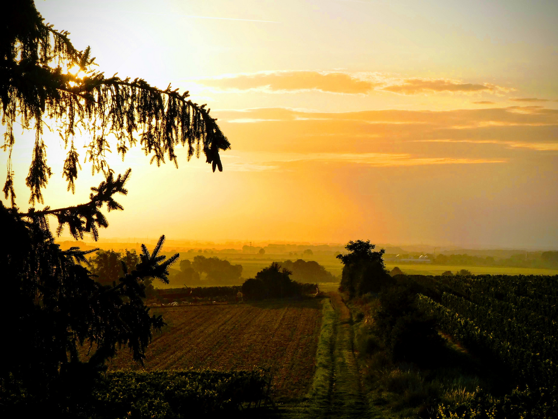 Sonnenaufgang in den Weinbergen
