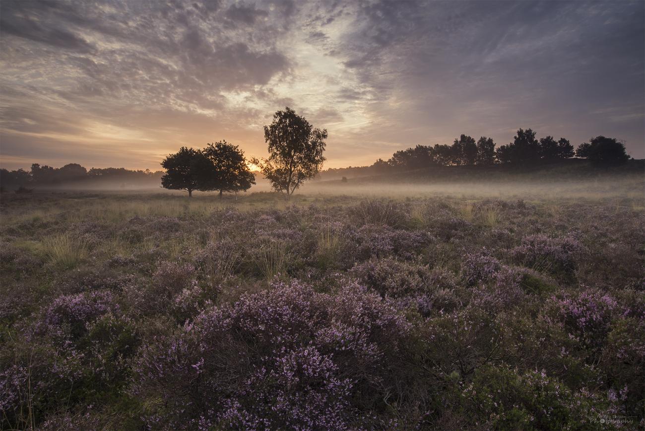 Sonnenaufgang in der Bergerheide, Niederlande