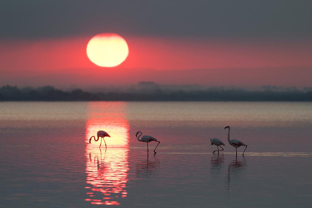 Sonnenaufgang in der Camargue