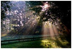 Sonnenaufgang in der Ohligser Heide (Solingen)