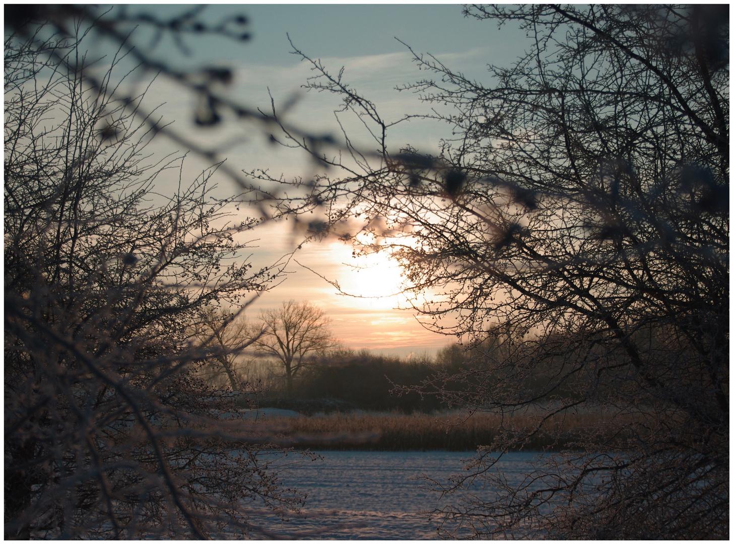 Sonnenaufgang in Rheinfeld