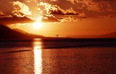 sonnenaufgang-in-ushuaia-45bba6cb-14c5-4935-ad5d-a7a255e1a543_ShiftN
